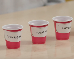 video cover of cups of vinegar, sugar water and salt water